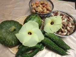 毎日収穫 新鮮野菜