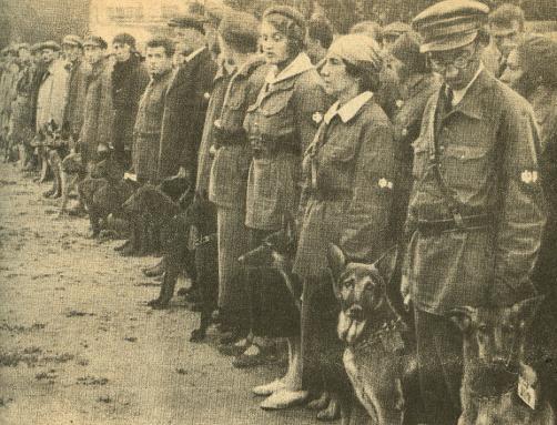 École soviétique de chiens de guerre en 1931.