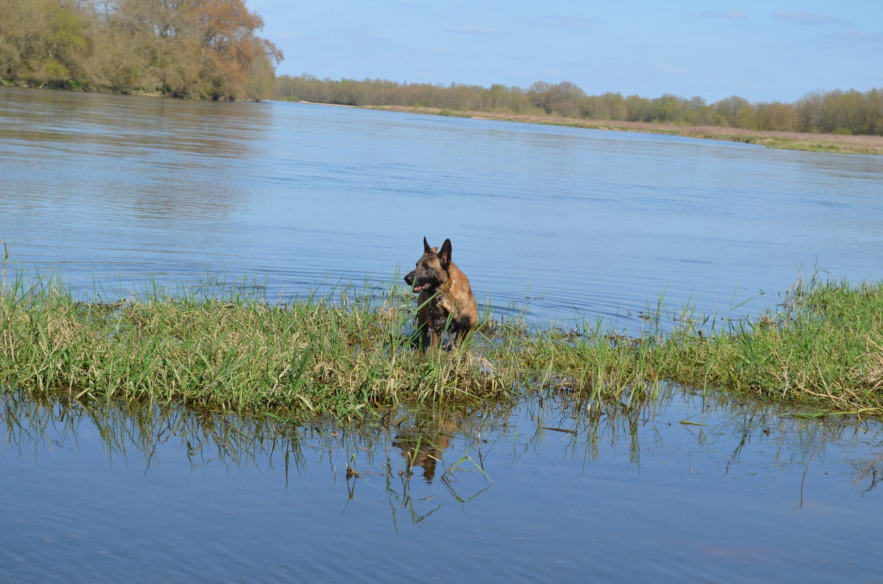 Henji 3 ans, sur les bords de Loire