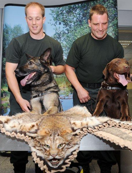 Recherche de contrabande à base de produits animaux