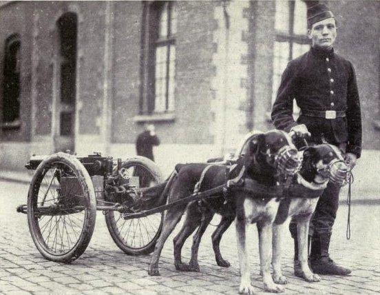 Attelage de chien et mitrailleuse belge