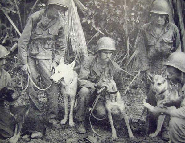 Seconde guerre mondial chien detecteur de mine us army pacifique