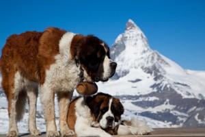 Sauveteur en montagne