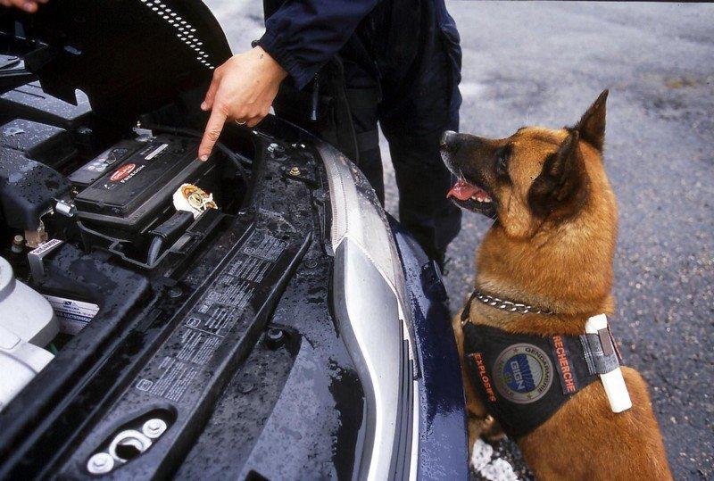 Chien de recherche d'explisifs - Gendarmerie