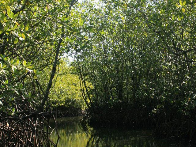 Traversez une mangrove luxuriante pour arriver au camp.
