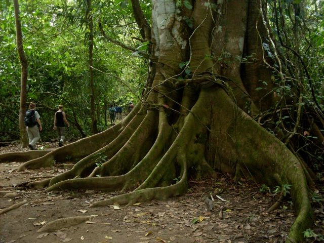 Corcovado National Park - Top Aventure