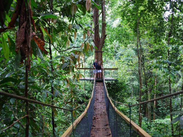 Pont suspendu pour arriver a la plateforme d observation du camp