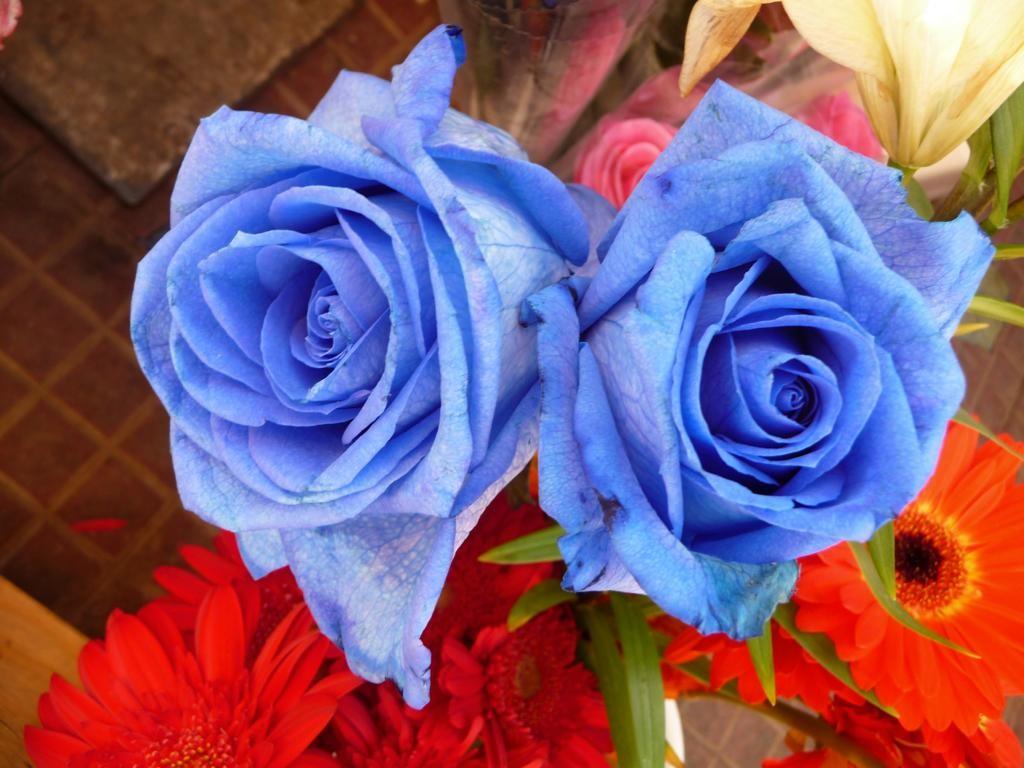 Seltene blaue Rosen