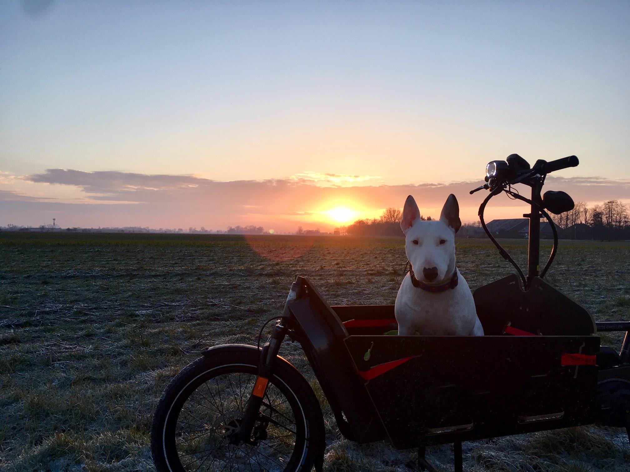 """""""So ein Lastenrad ist echt praktisch. Man braucht keinen Parkplatz suchen und es ist sowohl für den Hund, als auch für die große Sporttasche genügen Platz."""" - Patrick Bülter"""