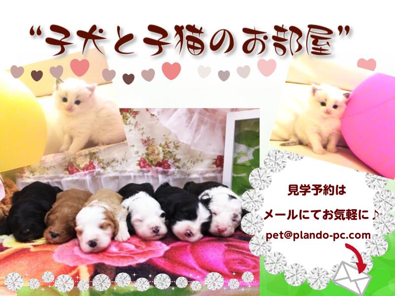 子犬と子猫のお部屋(出産情報)