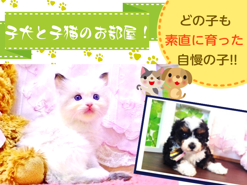 子犬と子猫のお部屋(私たちはブリーダです)