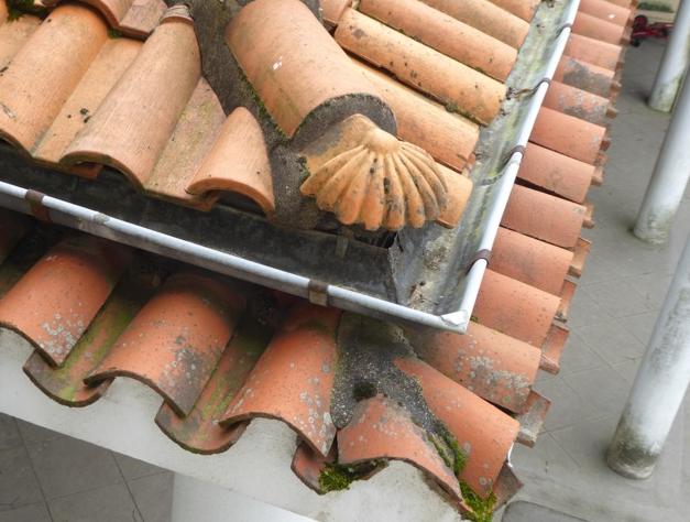 La coquille sur le toit.