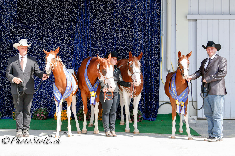 SPHA Futurity Weanling Stallions & SPHA Futurity Weanling Mares