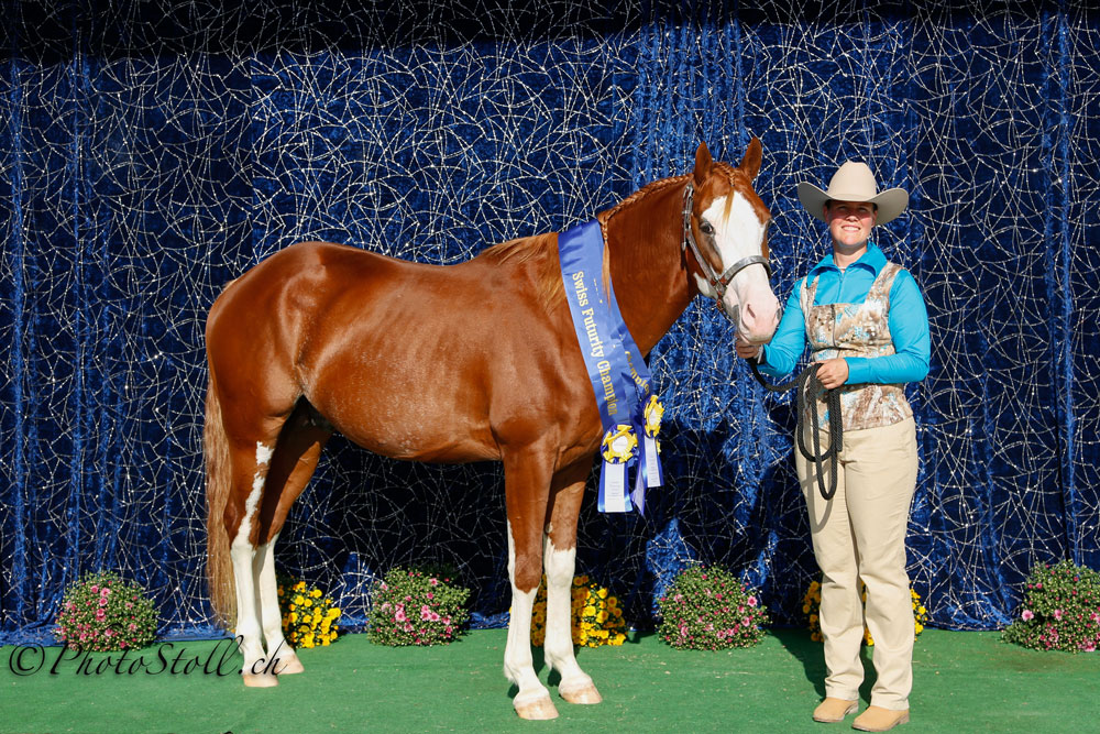 SPHA In Hand Trail, SPHA Longe Line und SPHA Three Year old Stallion Sonja Dürrenmatt
