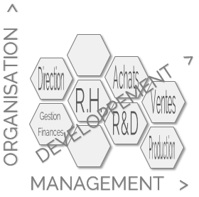 3 axes d'intervention : Organisation Management Développement