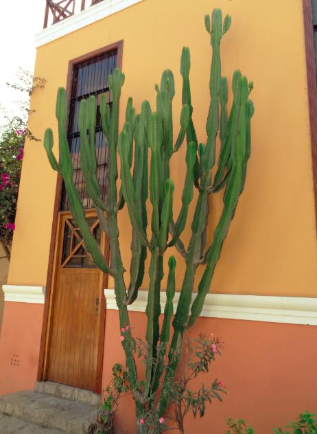 Big Cactus Love