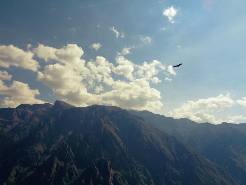Der Kondor hat eine Flügelspannweite von bis zu drei Metern