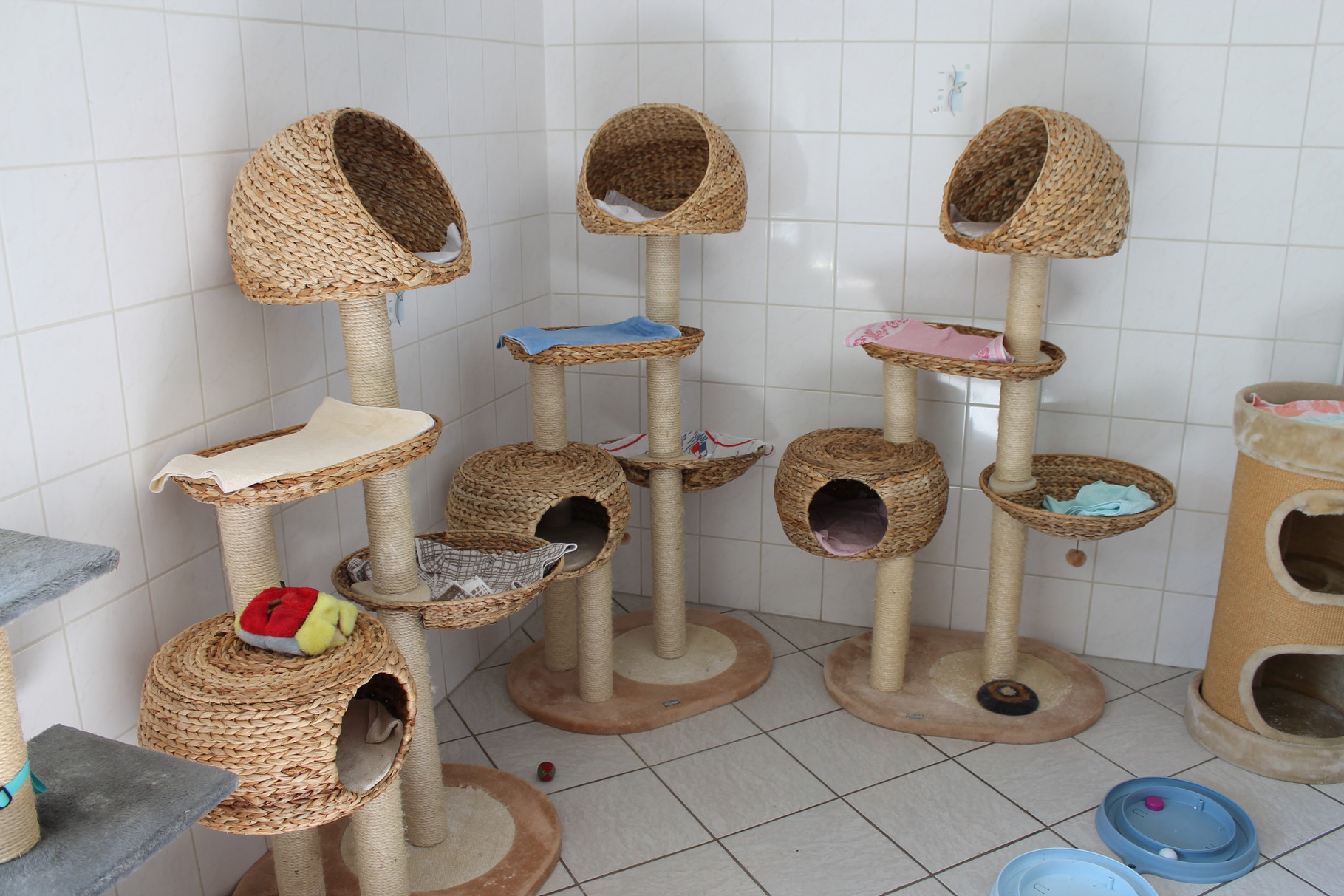Unser Katzenzimmer