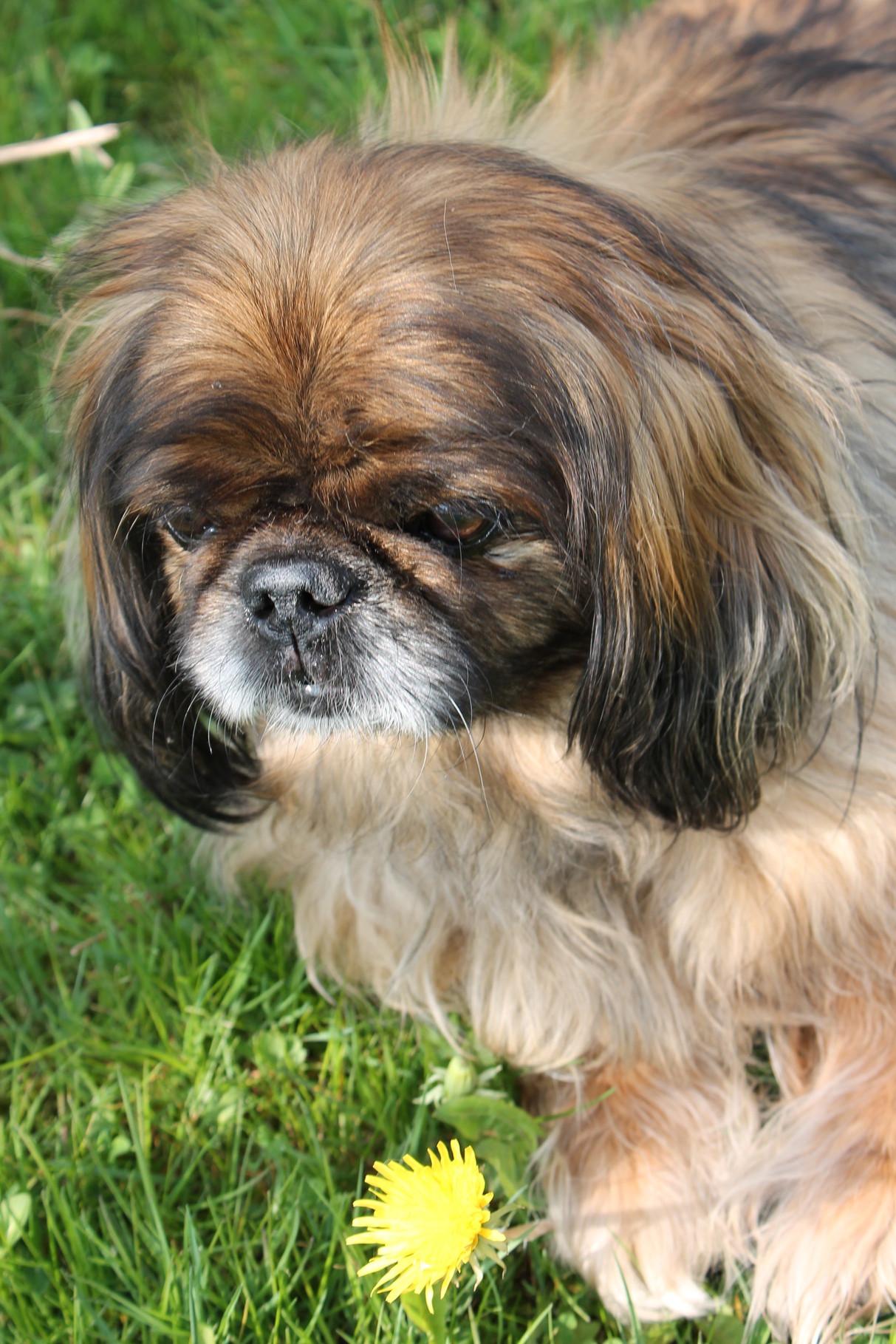 Hofhund Charlie (nicht vermittelbar)