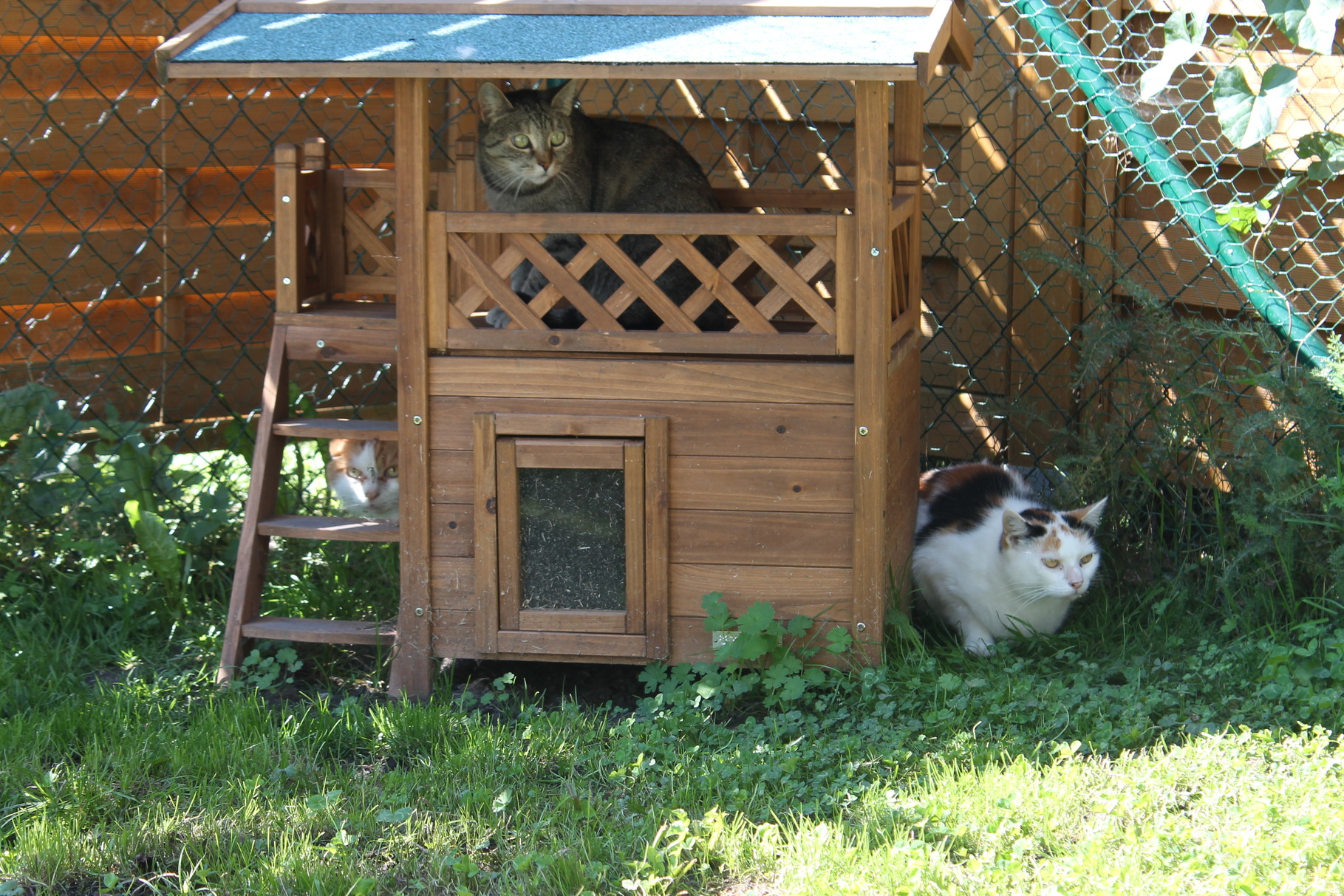 Freigang für die Katzenzimmerbewohner