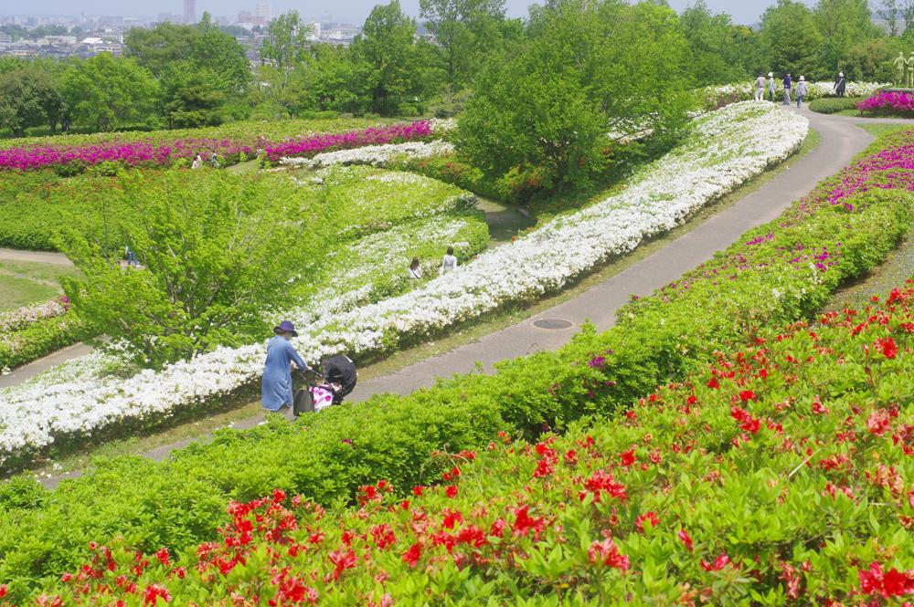 大乗寺丘陵公園での撮影会