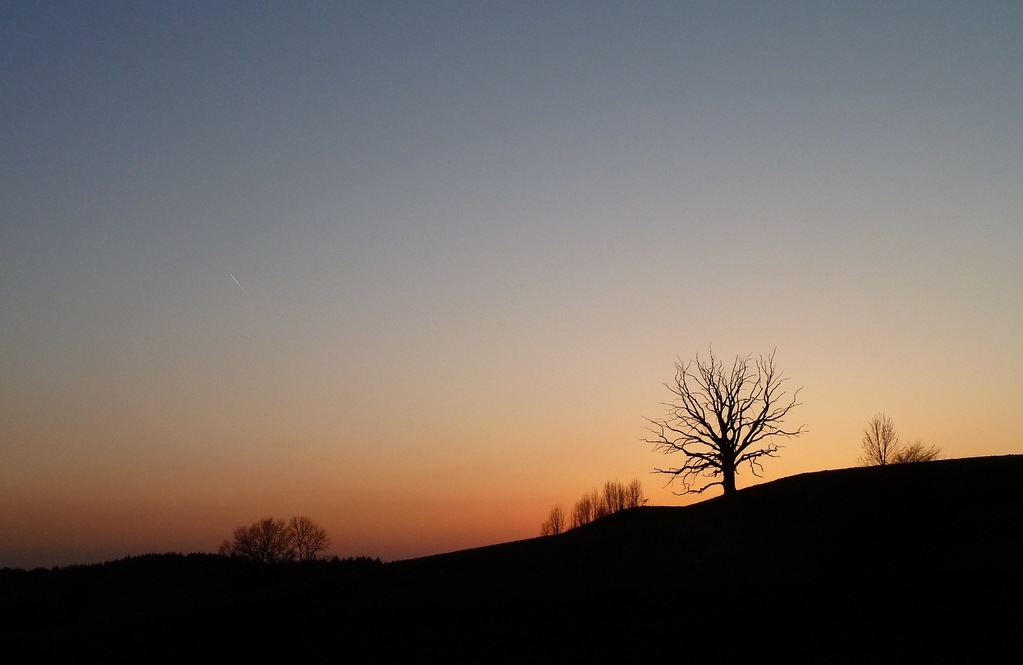 Der tote Baum bei Harmating