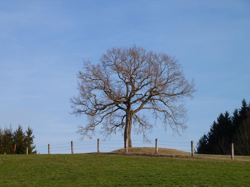 Der Blitzbaum am Veiglberg