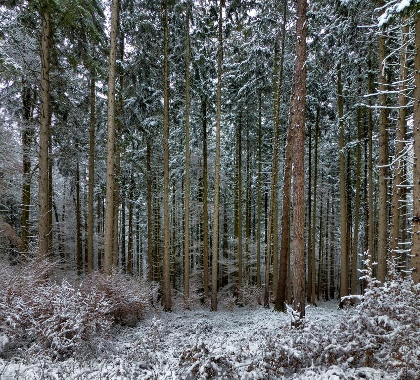 Zwischen Kreuzpullach und Großdingharting