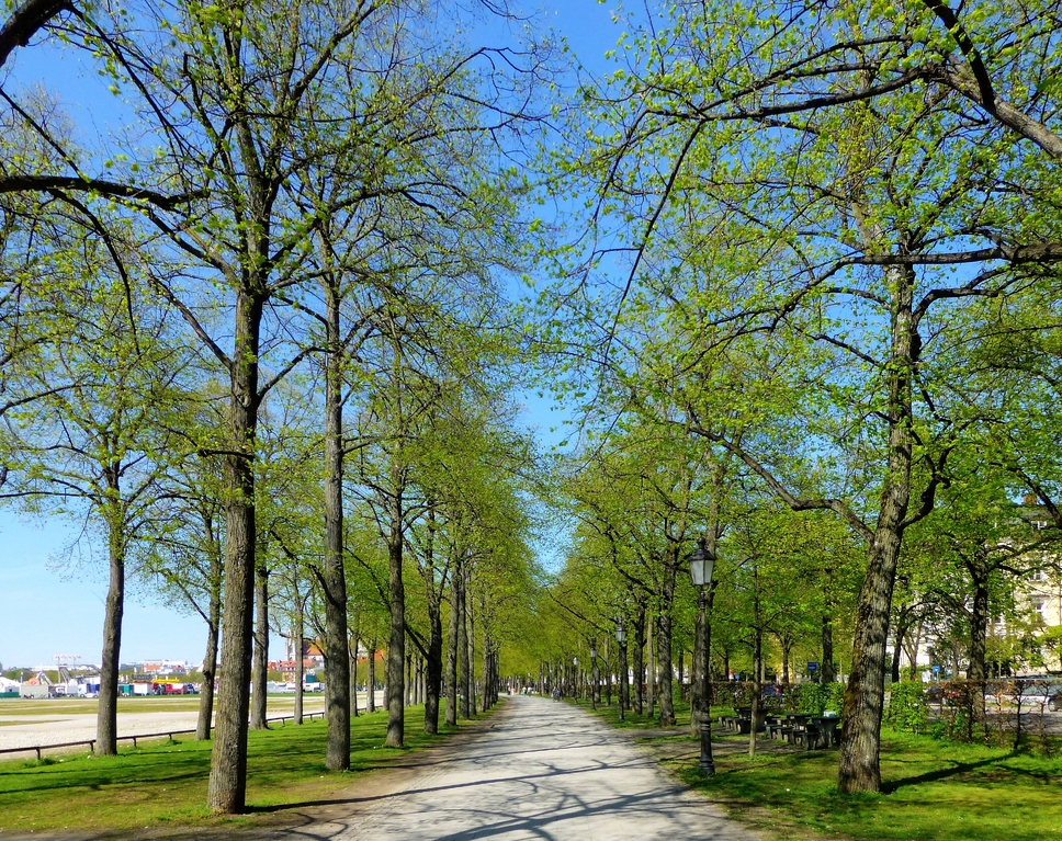 Allee am Rande der Theresienwiese