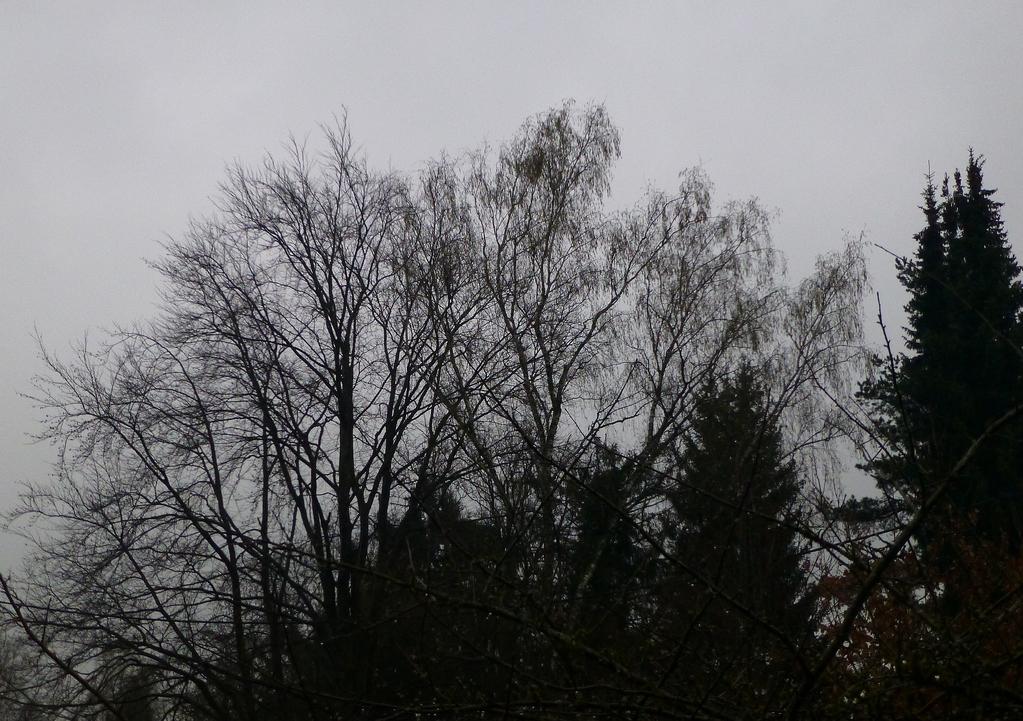 Grau-in-Grau