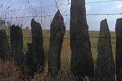 palis relié entre eux par du fil de fer
