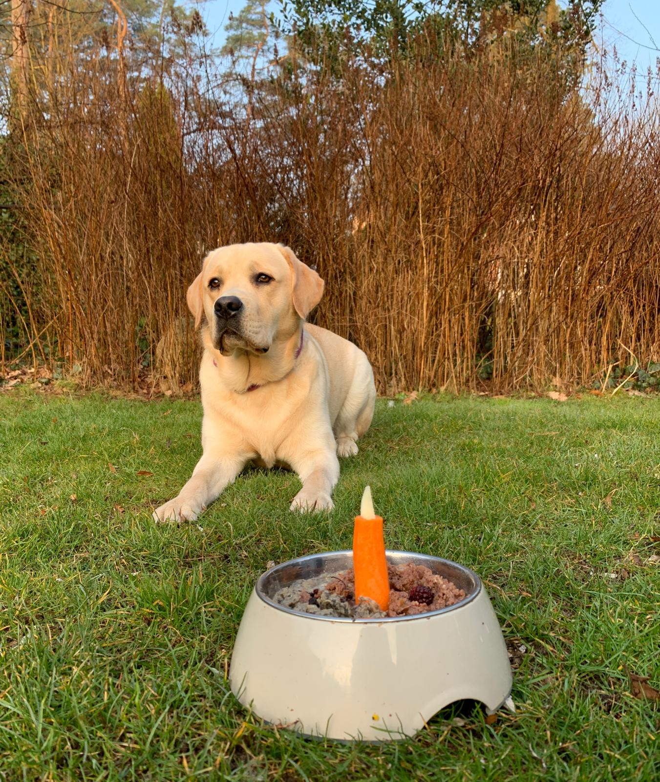 Peanut vor seinem Geburtstagsnapf!
