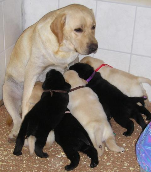 Santos und seine Geschwister bei Mutter Maggie