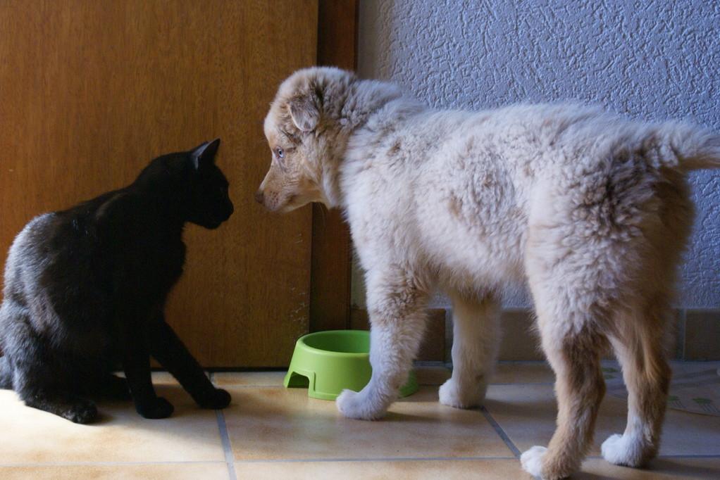 """mit Katze """"Sugus"""""""