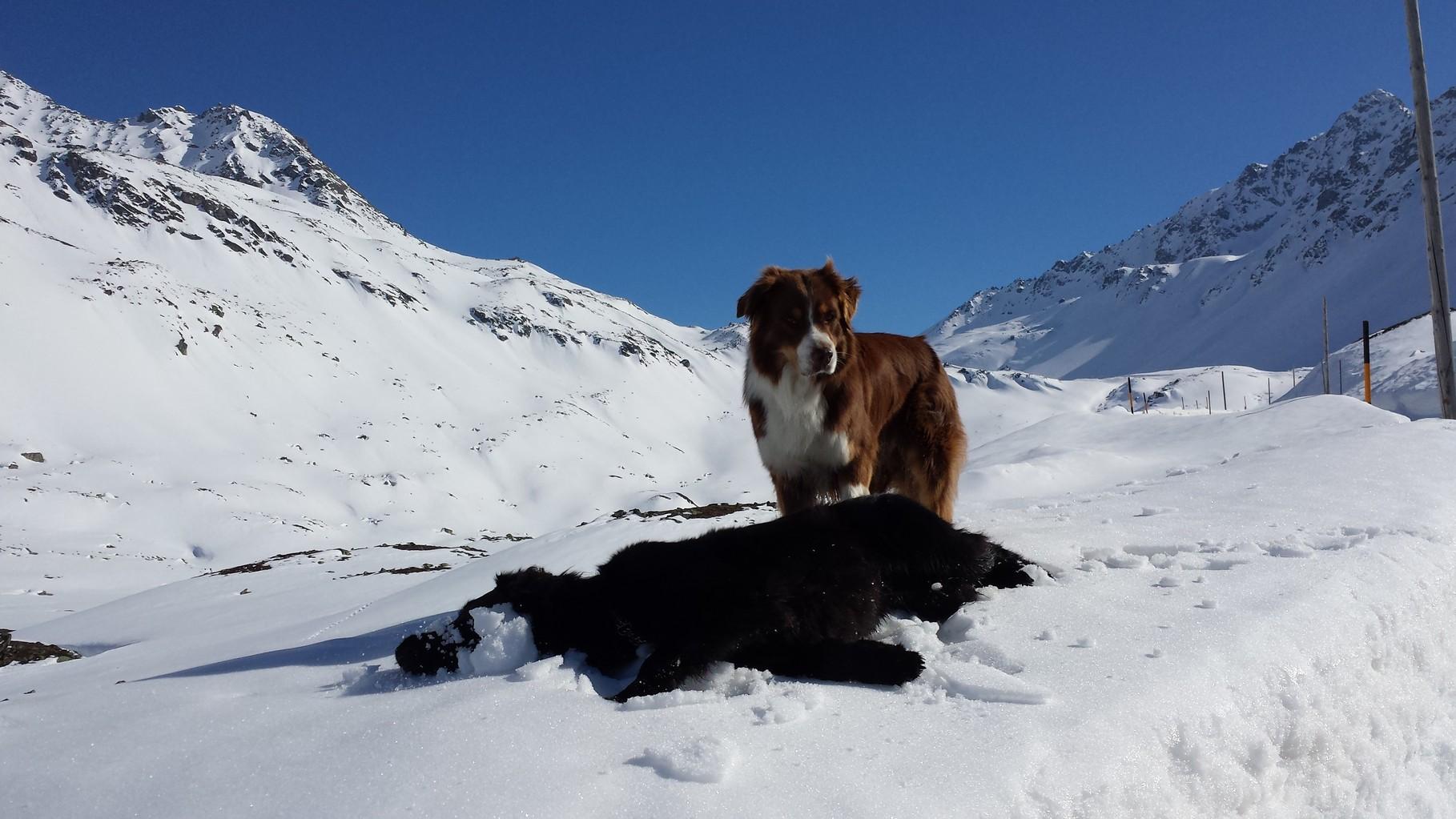 Immer liit d'Leyla i min Schnee !!!