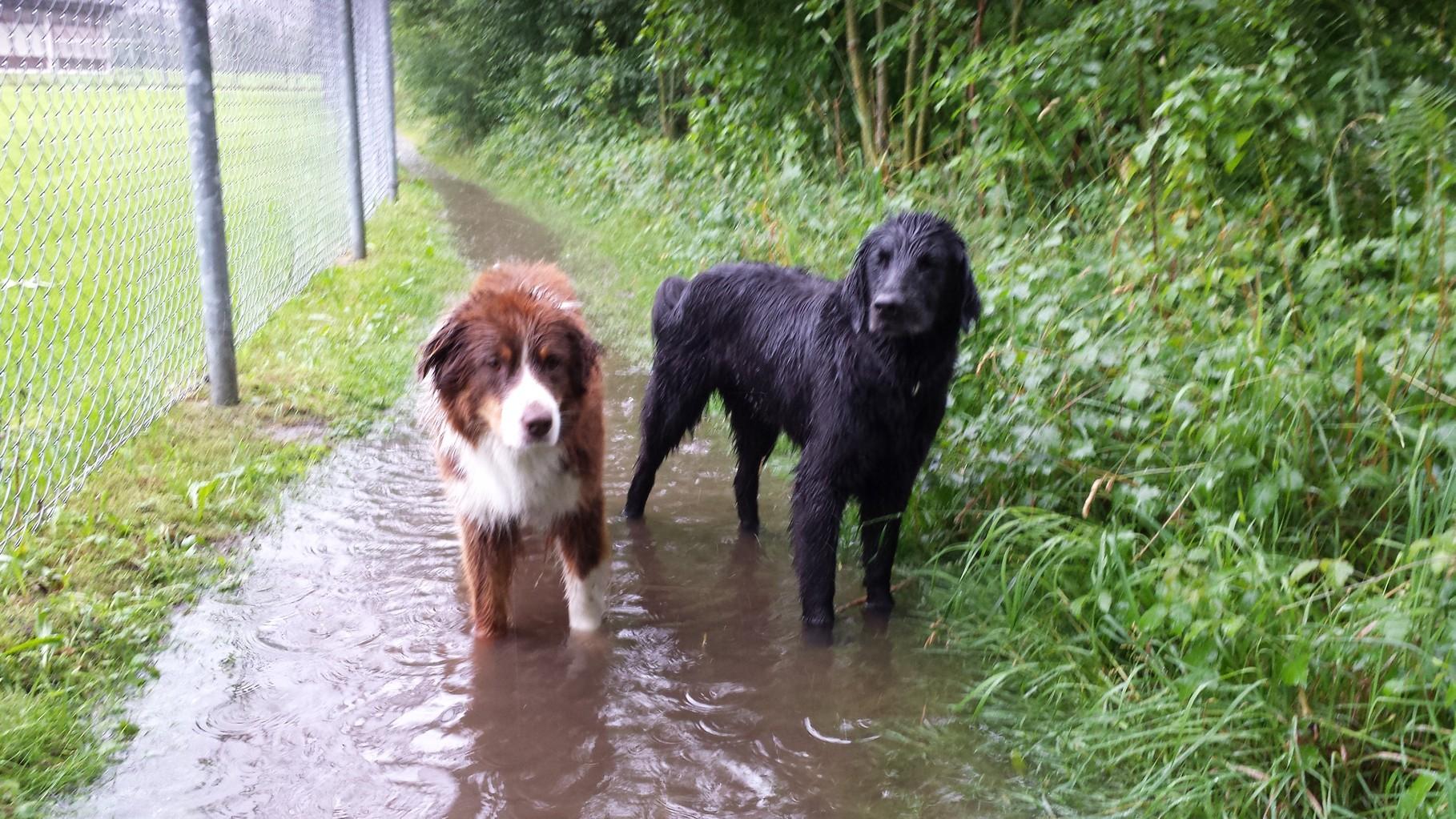 Auch im Toggi ist der Sommer nass!!