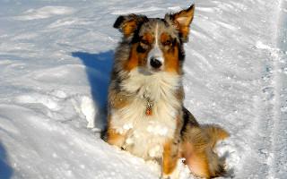 Blue adore la neige...