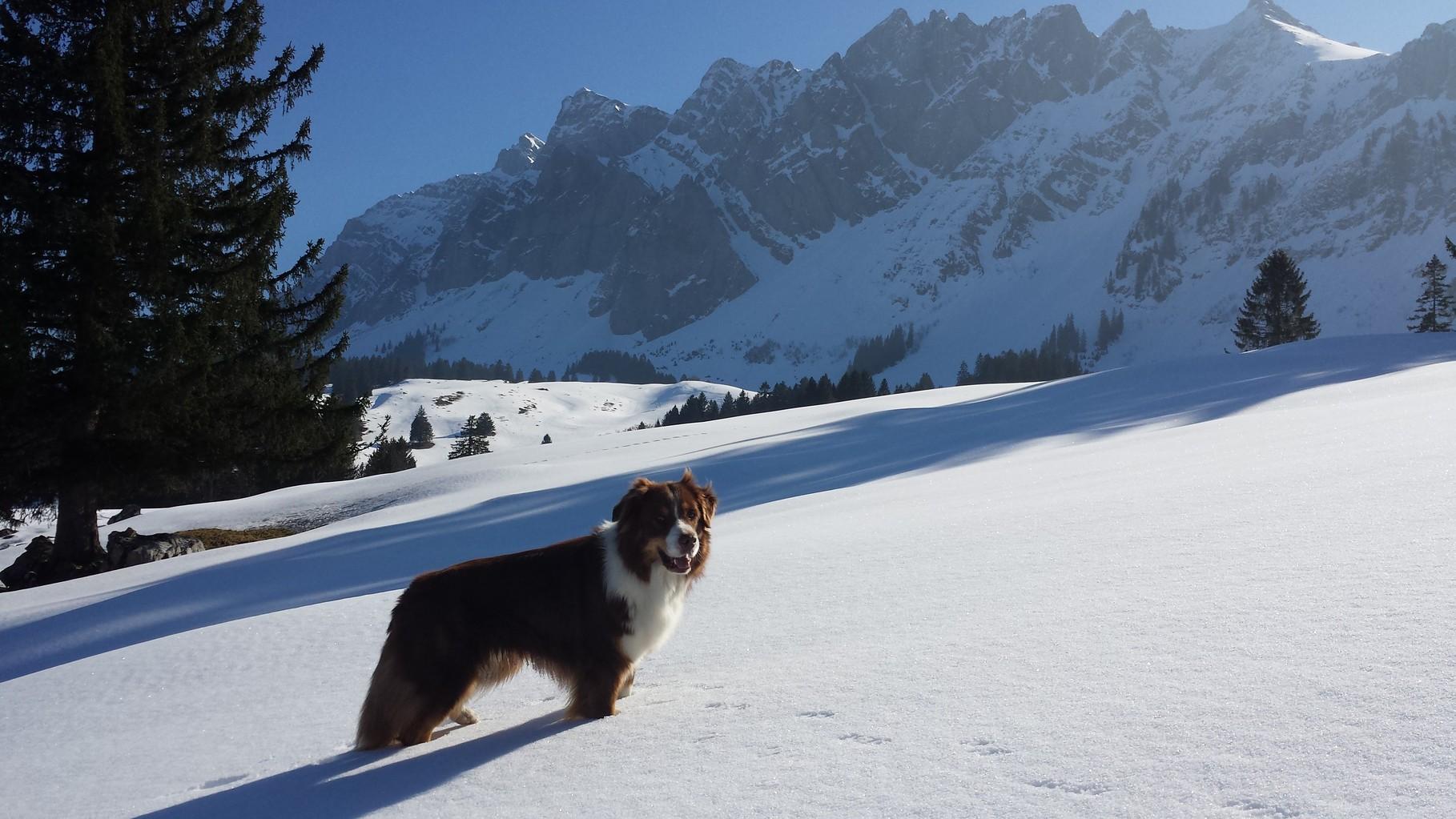 Im Alpstei
