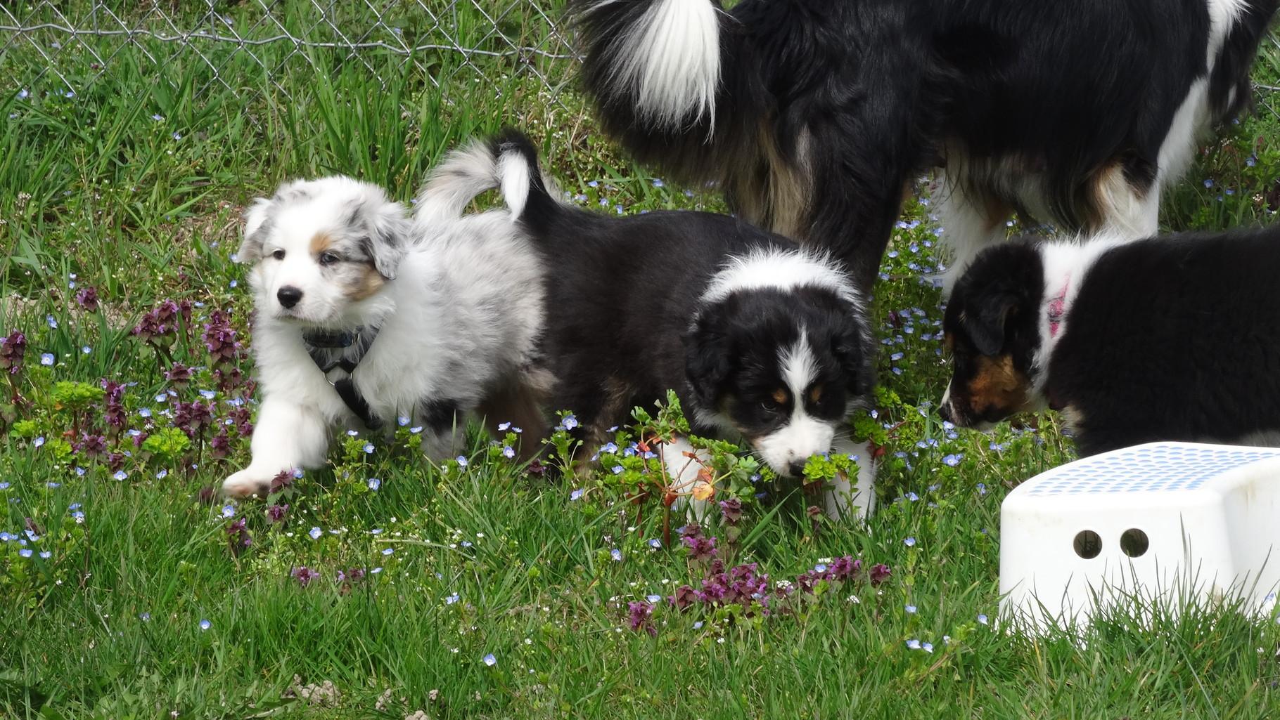 29. März, Ausflug auf den Hundeplatz