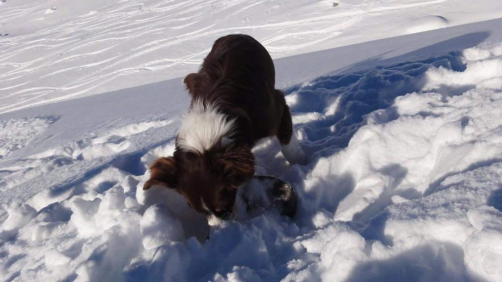 1.1.11 - Skitour auf dem Flüelapass...aber erst wird das würstligefüllte Militärsäckli ausgegraben!