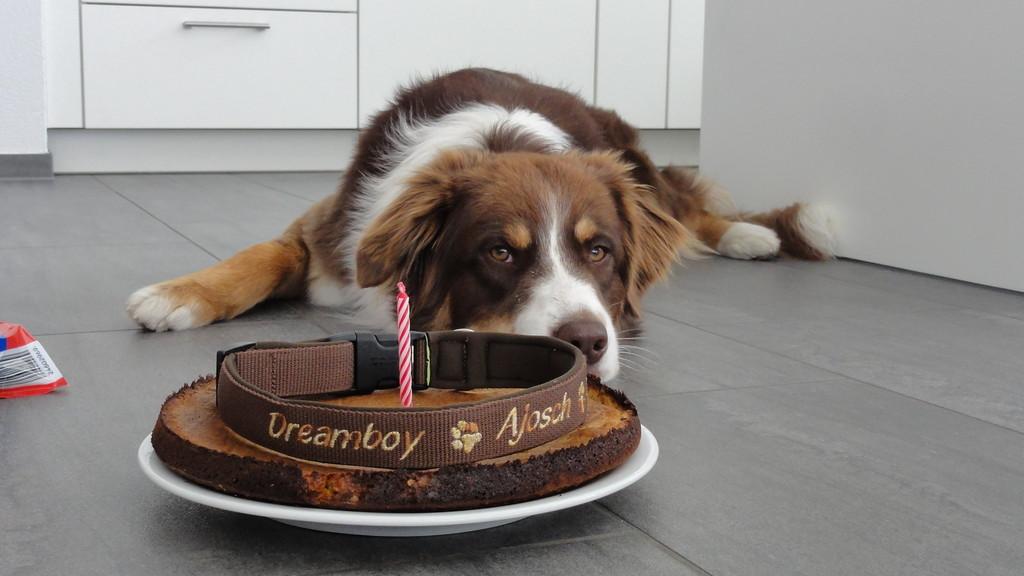 Mein 1.Geburtstag