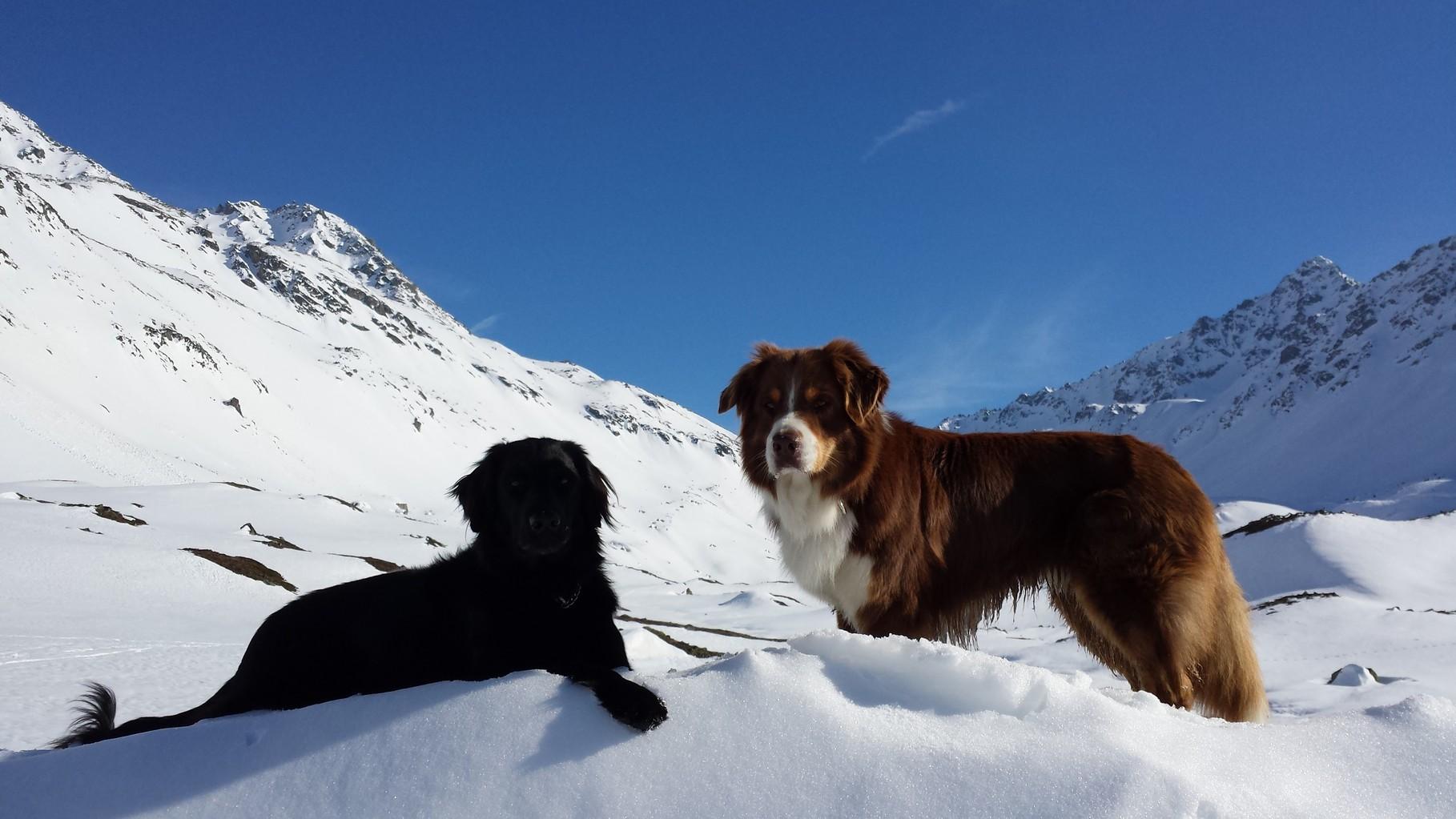 Schad de Winter isch scho fascht verbi :-((