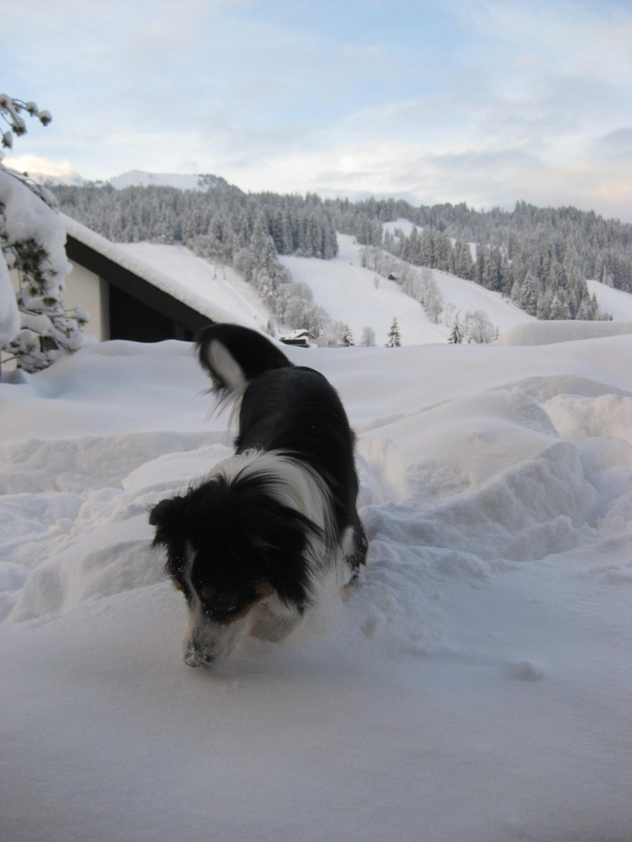 Tauchgang im Schnee.... tolll!!