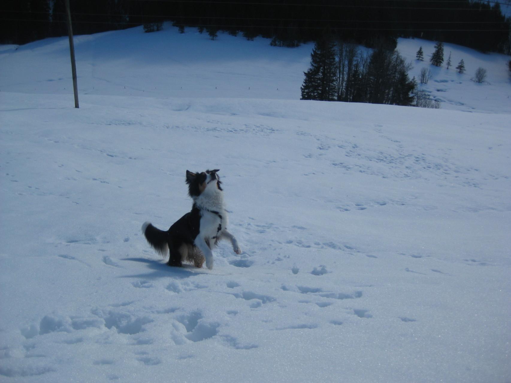 Ich liebe Schneeball- Fangis...