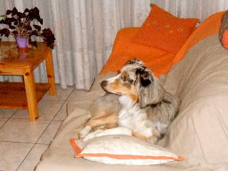 quelle vie de chien entre regarder mon émission préférée à la TV...
