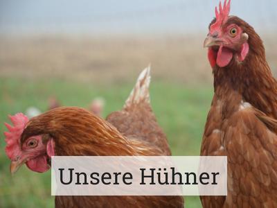 Hühner-Hühnerhaltung-Bioladen-Geilenkirchen