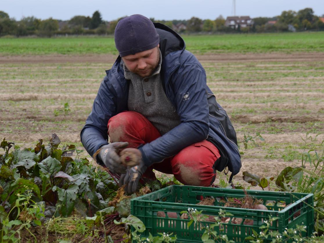 Die fleißigen Mitarbeiter in der Landwirtschaft