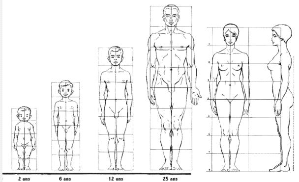 proportions du corps. nouveausculpteur cours de sculpturecours,sculpture,proportion,corps,tête,sculpter,symétrie, mouvement,apprendre .