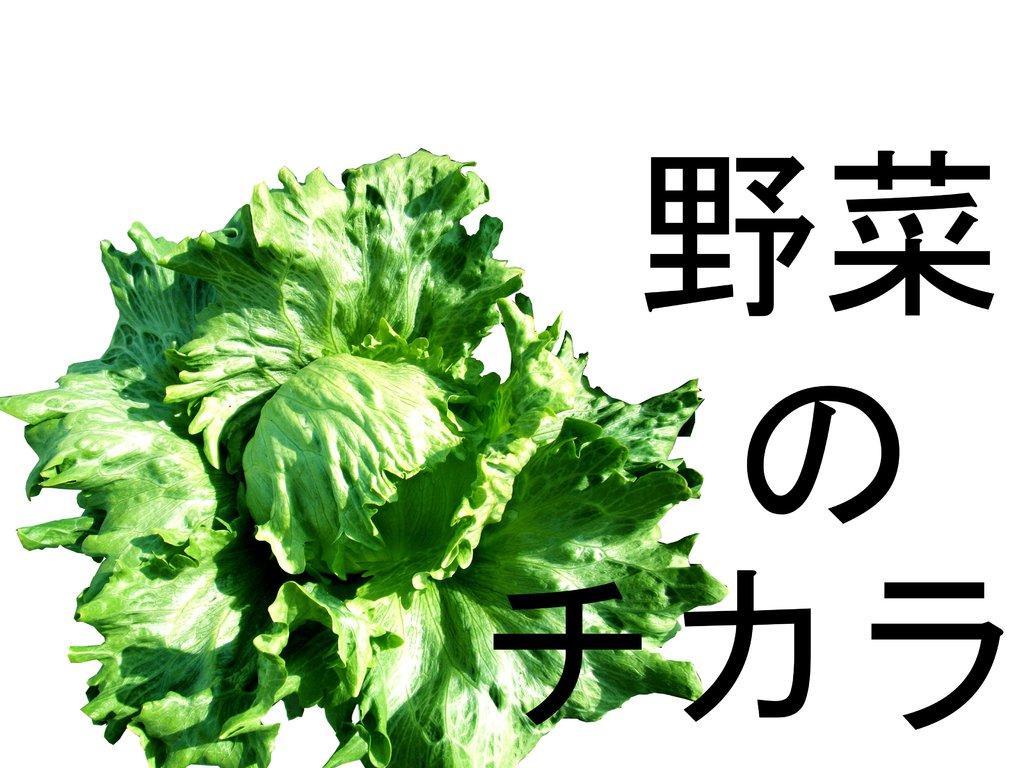 野 菜 の チ カ ラ