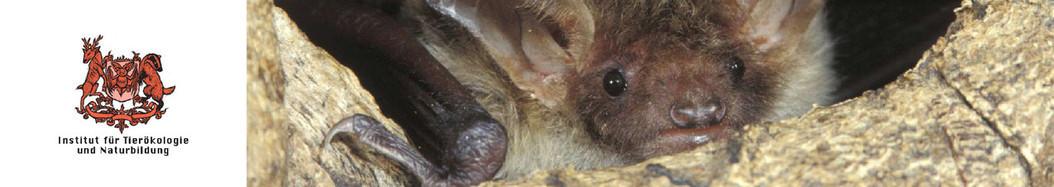 Über Fledermäuse| Institut für Tierökologie und Naturbildung